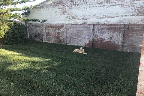 Yanchep Backyard Renovation